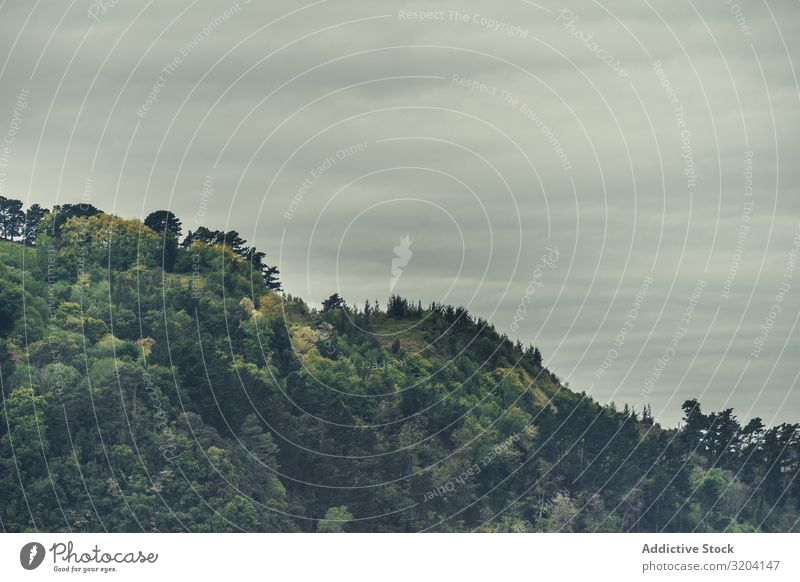 Bewölkter Himmel über grünem Hügel Wolken Baum grau Wetter zarautz Strand Spanien Landschaft Natur Menschenleer Halde Berghang Wolkendecke matt Stimmung Pflanze