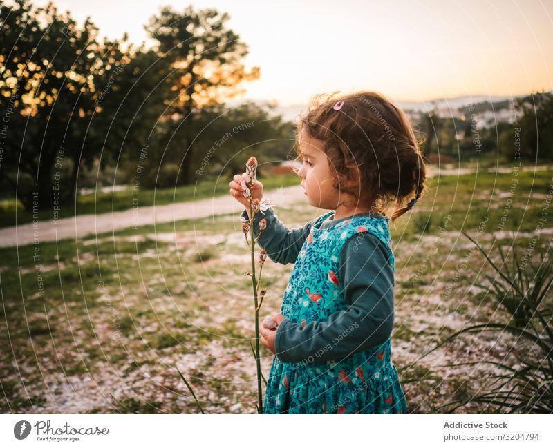Süßes kleines Mädchen studiert Blume im Park lernen niedlich reizvoll Blick entzückt Aufmerksamkeit fokussieren Kleinkind Sonnenuntergang verblüfft schön Kind