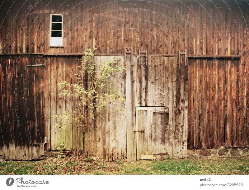 Tür und Tor Baum Gras Gebäude Scheune Scheunentor Fenster Holzwand alt historisch Vergangenheit Vergänglichkeit Zahn der Zeit verwittert Schiebetor Farbfoto