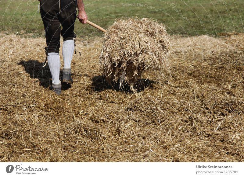 Humaner Heuwender Mensch maskulin Junger Mann Jugendliche Erwachsene Leben Beine 1 18-30 Jahre 30-45 Jahre Umwelt Natur Landschaft Herbst Gras Feld Alpen