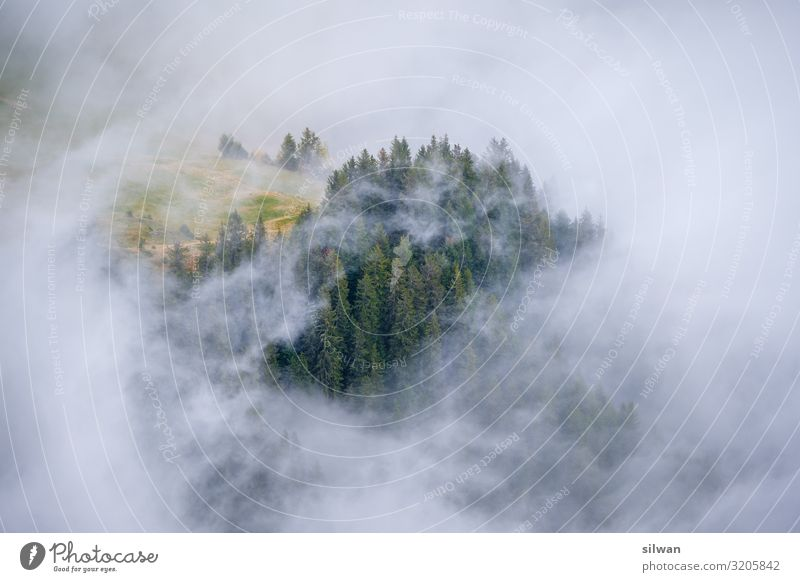 Nebelinsel im Nebelwald wandern Herbst ästhetisch gruselig hell natürlich unten Wald mystisch geheimnisvoll Verhext dunkel Herbstlandschaft Herbstwetter Tanne