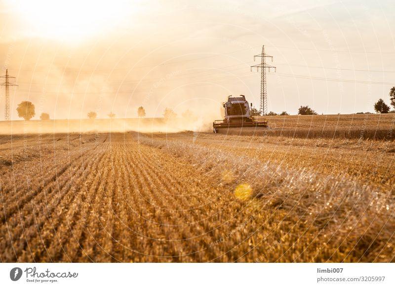 Mähdrescher Weizenernte Gemüse Sonne Natur Landschaft Pflanze Fahrzeug Traktor Wachstum Agronomie Feld Erntemaschine Maiserntemaschine Bauernhof Feldfrüchte