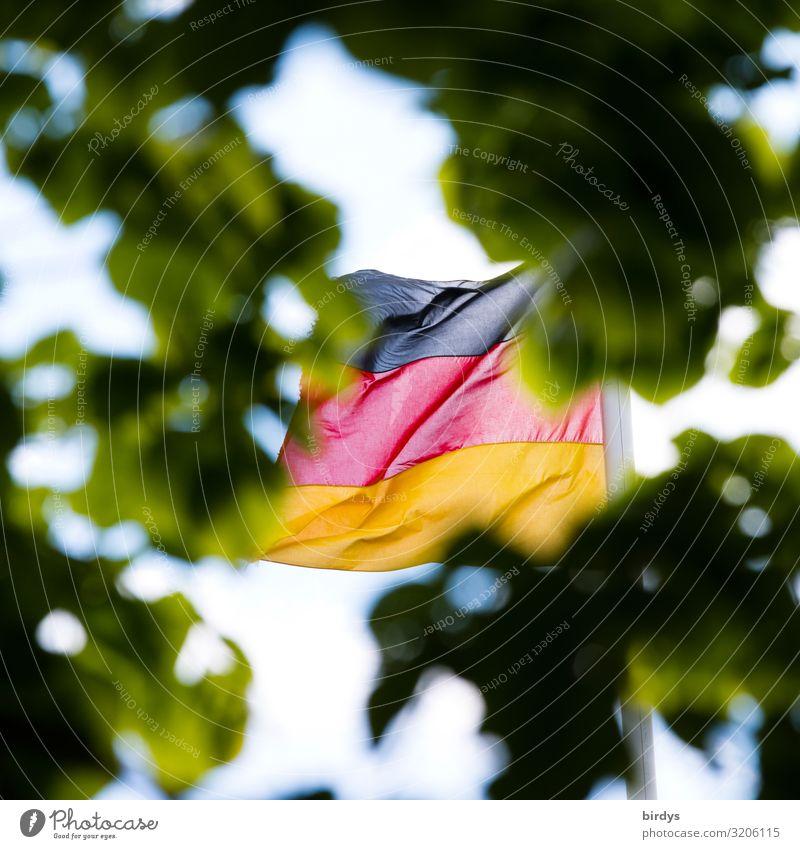 Zahnlos,versteckt, verhalten Sommer Klimawandel Wind Blatt Grünpflanze Ast Deutschland Deutsche Flagge Fahne entdecken authentisch gold rot schwarz