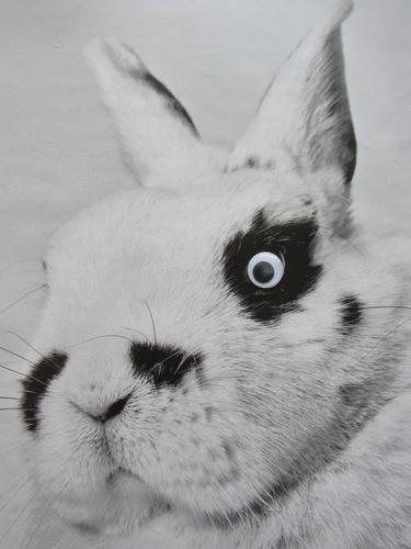 Zwergschecke Natur weiß Tier schwarz Gefühle niedlich Haustier Fell Hase & Kaninchen Tiergesicht kuschlig Verantwortung Tierliebe Kinderaugen