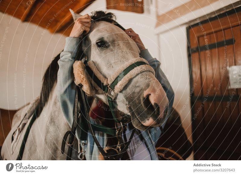 Weißes Pferd im Ranch-Stall Pflege Kabelbaum Pferdestall Bauernhof Tier Zaumzeug ländlich Sport Sattel Reinrassig Reiterin Haustier weiß ruhig vorbereiten