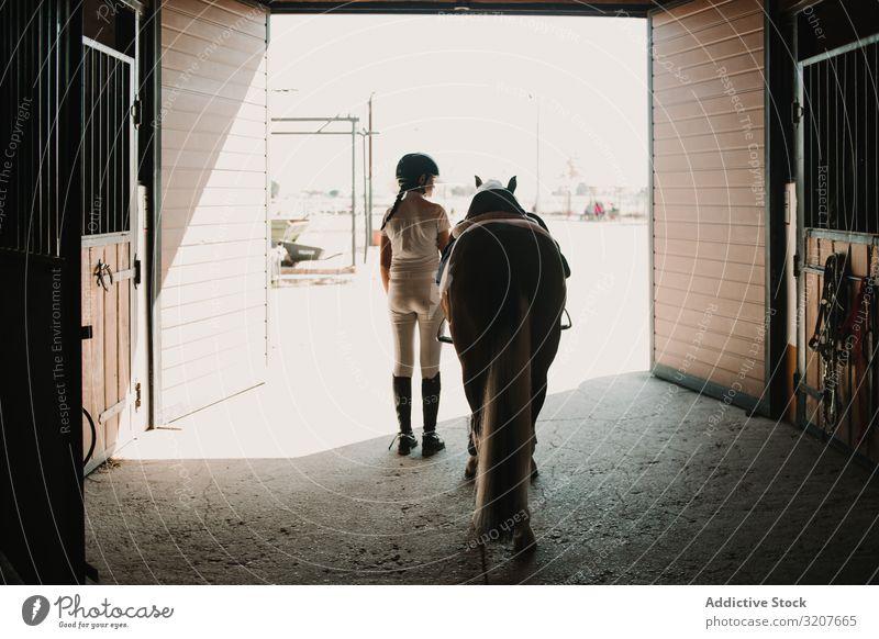 Jockey führt Pferd aus dem Stall Frau Pferdestall Blei lässig bereit Bauernhof Pflege Tier Reiter Aus Scheune Säugetier aktiv Aktivität professionell Sattel