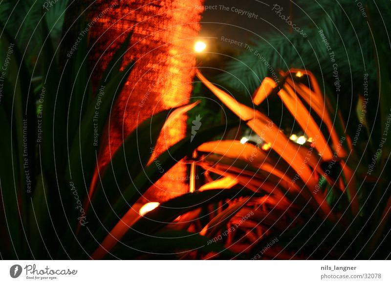 palme in dubai grün rot Farbe Lampe Palme Dubai Vereinigte Arabische Emirate Naher und Mittlerer Osten