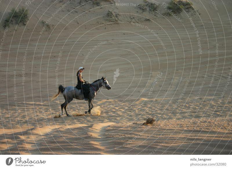 Die Wüste lebt Sand Pferd Dubai Reiter Araber