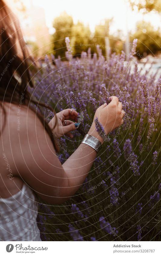 Getreidefrau berührt Lavendel Frau Glück Lifestyle lässig brünett Vergnügen Boho elegant niedlich modisch sinnlich faszinierend Fröhlichkeit gelungen Schönheit