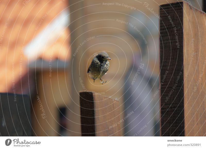 Sichere Landung? Tier Tierjunges Freiheit Vogel fliegen Wildtier Vertrauen Landen Spatz