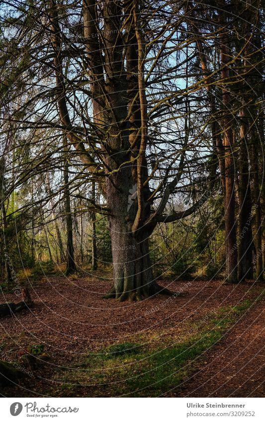 Im Herbstwald Umwelt Natur Landschaft Pflanze Schönes Wetter Baum Park Wald atmen Erholung stehen dehydrieren natürlich braun ruhig Einsamkeit Netzwerk
