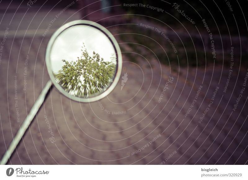 Rückspiegel grün Pflanze Baum grau braun Glas Spiegel Motorrad Pflastersteine Kleinmotorrad Spiegelbild
