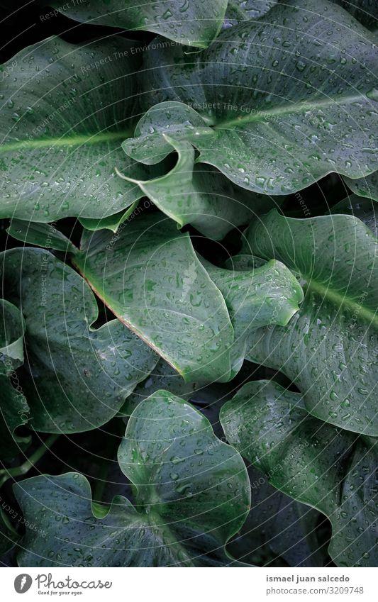 Natur Pflanze grün Wasser Blatt Hintergrundbild Herbst natürlich Garten hell Regen frisch glänzend nass Jahreszeiten Tropfen