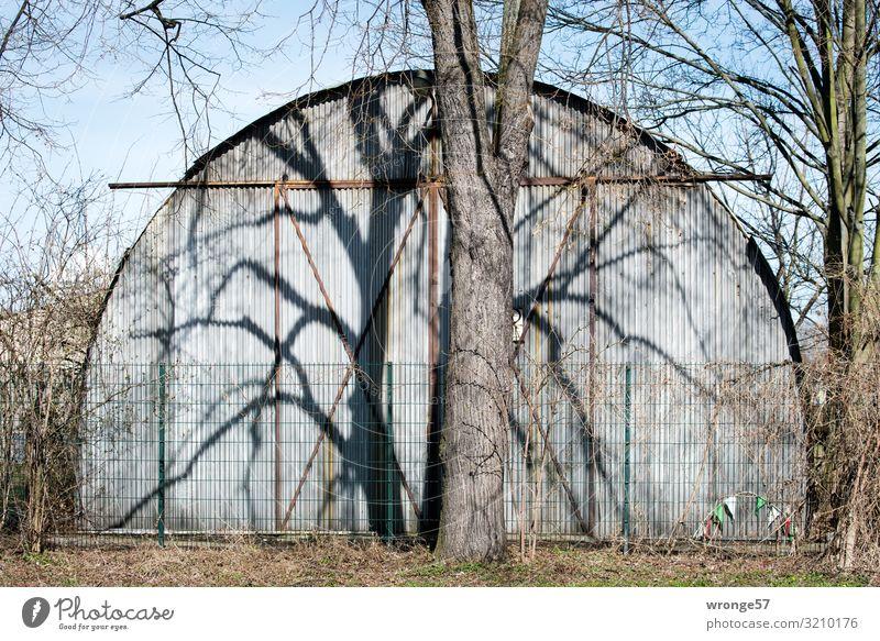 Baum wirft seinen Schatten auf eine Wellblechhalle am Straßenrand Baumstamm kahl blattlos Schattenwurf Menschenleer Außenaufnahme Farbfoto Tag Winter Kontrast