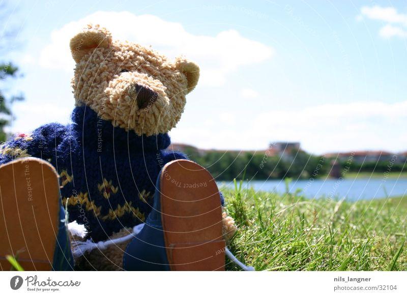 Lino on tour 2 Mann Sonne Wiese Park Schuhe Stofftiere Honig Teddybär