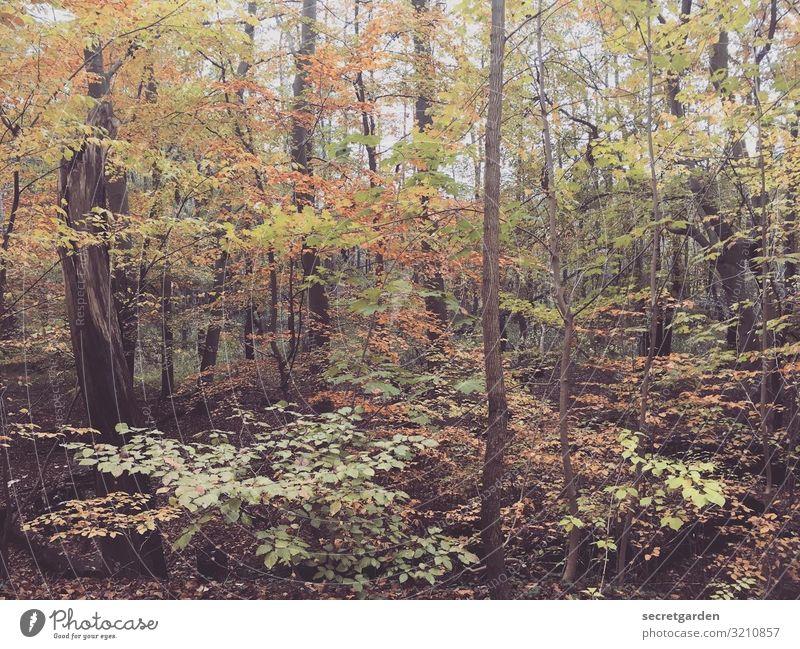 blickdicht. braun rot orange Schatten Schwache Tiefenschärfe Herbstlaub Unschärfe Farbfoto herbstlich Blätter Blätterdach Urwald Wald Waldspaziergang