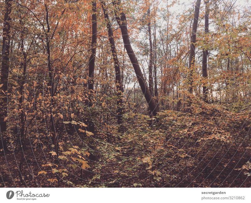 dahinblättern. naturbelassen Öko ökologie Okösystem verlaufen Laubwald ruhig Sträucher Frühling Kontraste wandern Zentralperspektive natürlich
