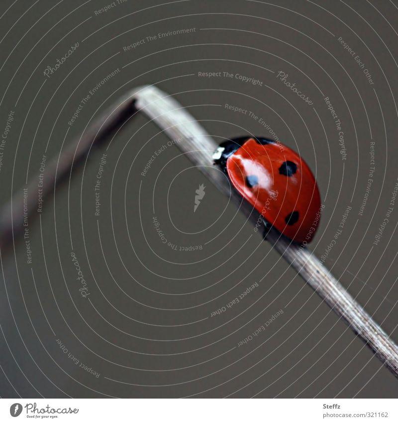 Karriereknick Natur rot Bewegung grau Erfolg Ecke Zukunft kaputt Ziel Insekt aufwärts Käfer krabbeln aufsteigen Fortschritt