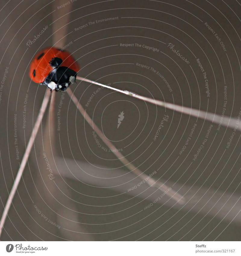Es gibt drei Wege Natur Käfer Marienkäfer Insekt braun Unentschlossenheit Vorsicht Wege & Pfade möglich wählen unentschlossen unsicher Denken 3 Glücksbringer