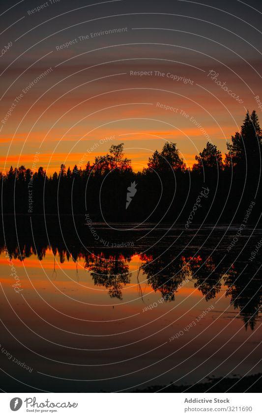 Sonnenuntergangshimmel über Bäumen und Sumpf Sumpfgebiet Wasser Baum Silhouette Wald hell Abend Natur Finnland Landschaft Abenddämmerung Dämmerung Umwelt