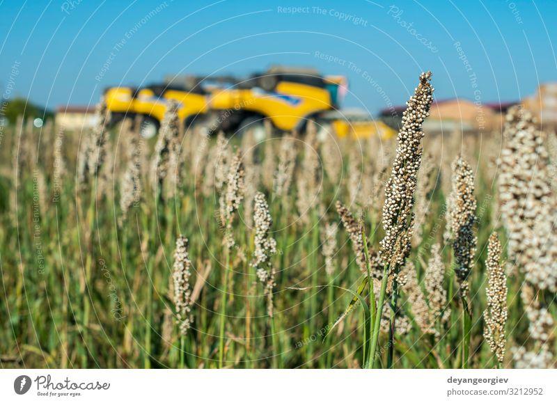 Natur Sommer Pflanze grün Landschaft Blatt Umwelt natürlich Wachstum Fotografie Jahreszeiten Bauernhof Ernte Stengel reif Ackerbau