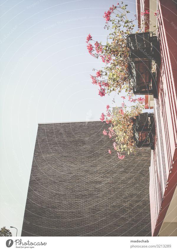 Balkon nach DIN aka Balkonien Pflanze Blume Gebäude Architektur Mauer Wand Fassade Blühend frech retro Glück Romantik diszipliniert Ordnungsliebe Reinlichkeit