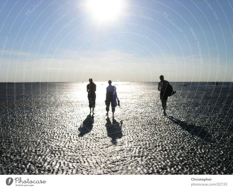 Der Sonne entgegen Sonne Horizont Wattenmeer Wattwandern