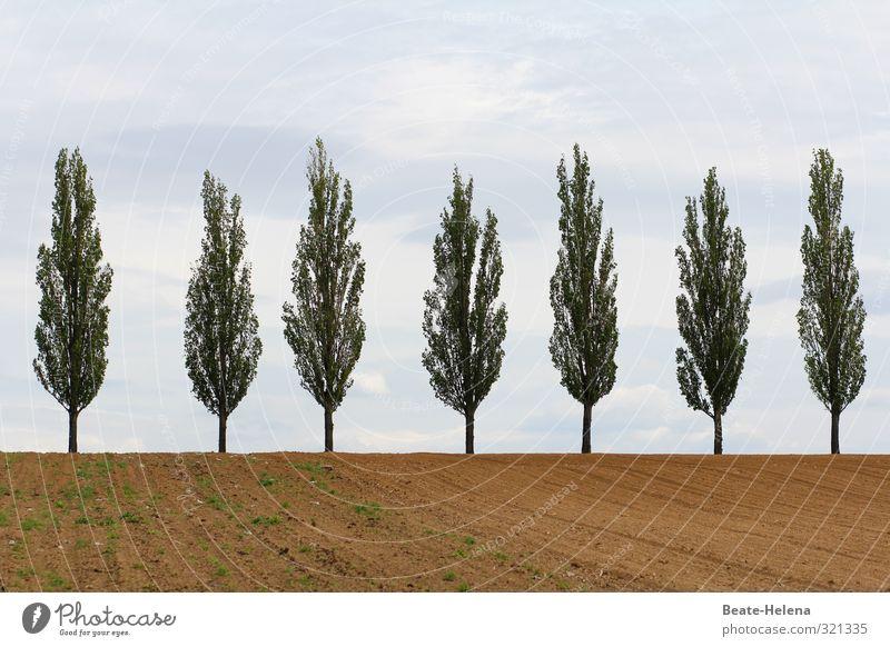 Freiheit, Gleichheit, Brüderlichkeit Natur Landschaft Wolken Schönes Wetter Baum Sand ästhetisch authentisch natürlich blau braun grün Zusammensein Zusammenhalt