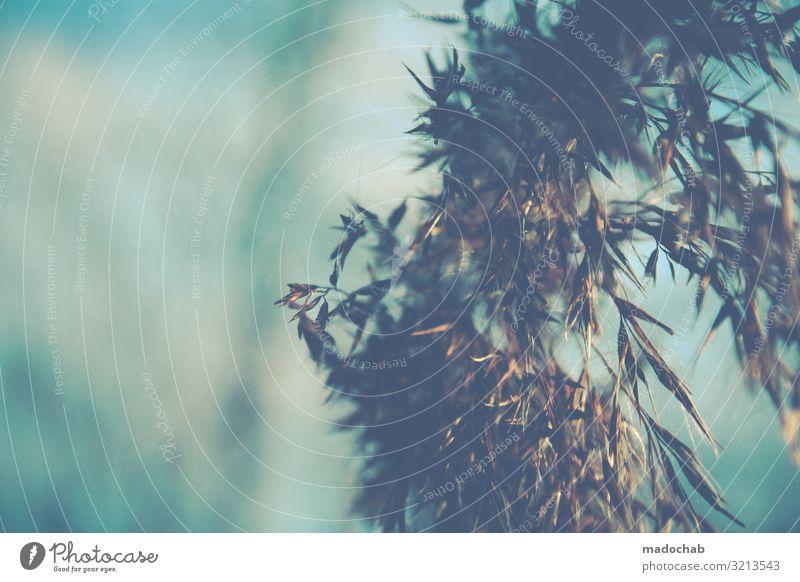 Gedöns Umwelt Natur Pflanze Klima Klimawandel Gras Sträucher Feld sparsam Farbfoto Gedeckte Farben mehrfarbig Außenaufnahme Menschenleer Textfreiraum links