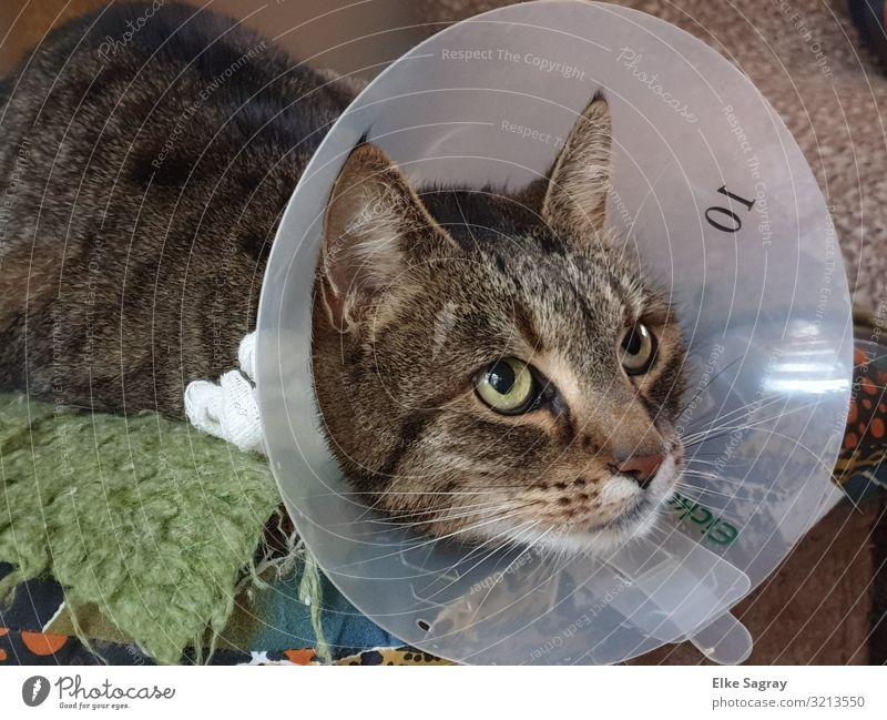 Arme , kranke Katze... Tier Krankheit Tierliebe