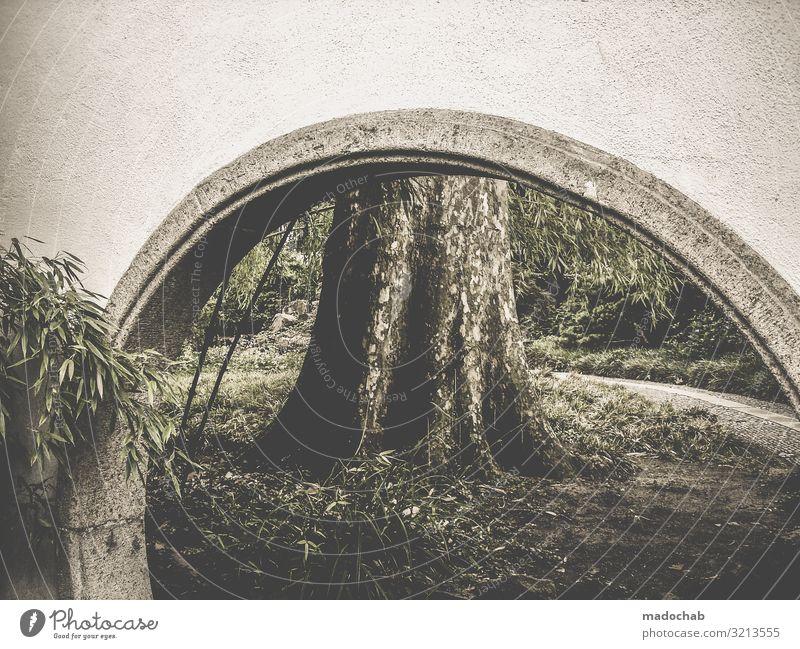 Torbogen vor einem Baumstamm Natur Brücke Kontrast Umwelt Bambus Chinesischer Garten Park Landschaft Menschenleer Außenaufnahme Pflanze Farbfoto Wald Tag grün