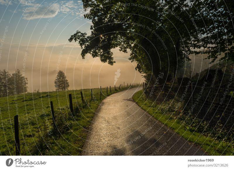 Morgenspaziergang im Nebel Natur Landschaft Sonnenaufgang Sonnenuntergang Sommer Baum Feld Alpen Menschenleer Wege & Pfade Erholung gehen genießen laufen Glück