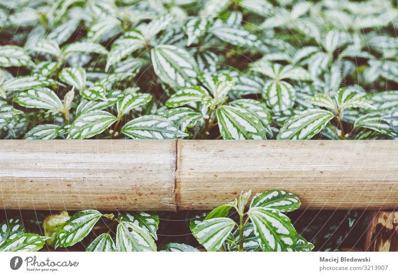 Nahaufnahme eines Bambuszauns in einem Park. Garten Natur Pflanze Blume Sträucher Blatt Grünpflanze alt retro grün Erholung Frieden Gelassenheit Hoffnung Idylle