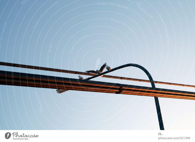 flugplatz Umwelt Natur Himmel Wolkenloser Himmel Schönes Wetter Tier Vogel Flügel 3 Tiergruppe fliegen sitzen frei Stadt Freiheit Möwe Lampe Straßenbeleuchtung