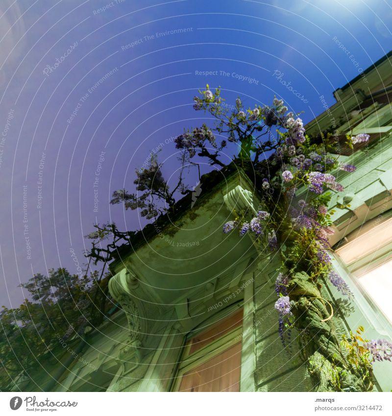Balkon Lifestyle Häusliches Leben Haus Blume Kletterpflanzen Architektur Altbau Fassade Fenster alt einzigartig Stimmung ästhetisch Farbe Sommer Sommernacht