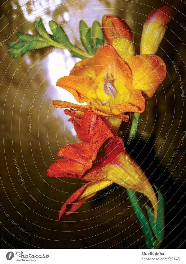 Flower schön Blume gelb Stil Blüte orange harmonisch Messing
