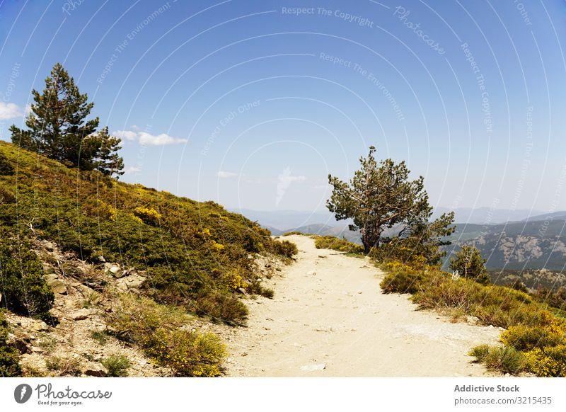Malerische Ansicht eines Feldweges auf grünen Hügeln malerisch schön Blume blau wolkenlos Himmel Natur Landschaft Wiese idyllisch Blüte Überstrahlung Sommer