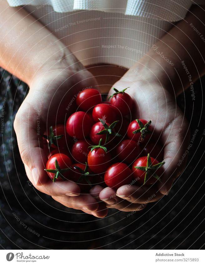 Glänzende Kirschtomaten mit grünen Stielen in den Händen Tomaten reif Vegetarier Lebensmittel glänzend organisch Gemüse Weide roh frisch natürlich Frische ganz