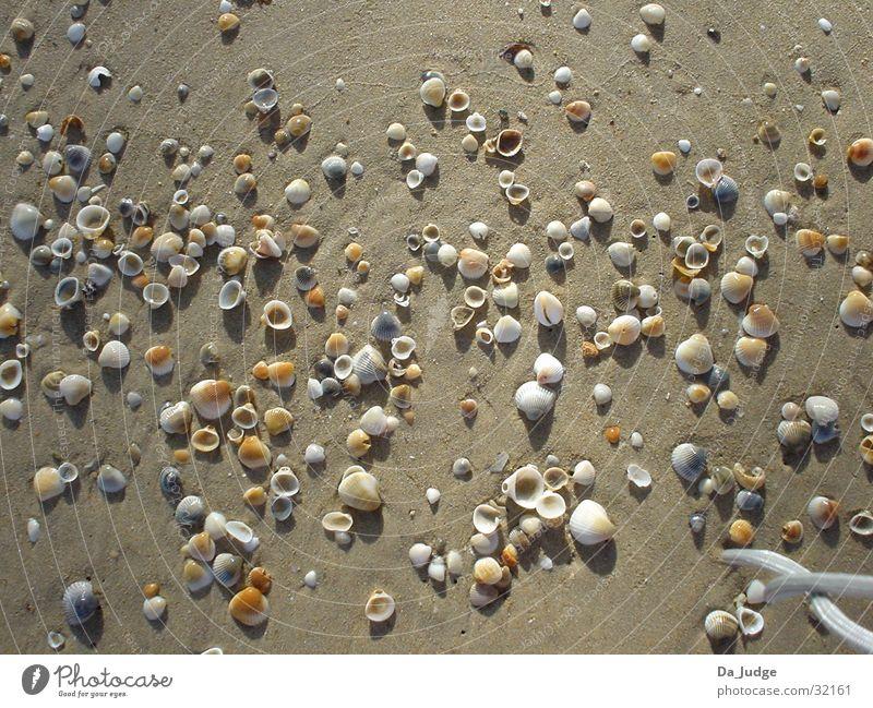 Muschelstrand Wasser Sonne Meer Strand Sand Erfolg Muschel
