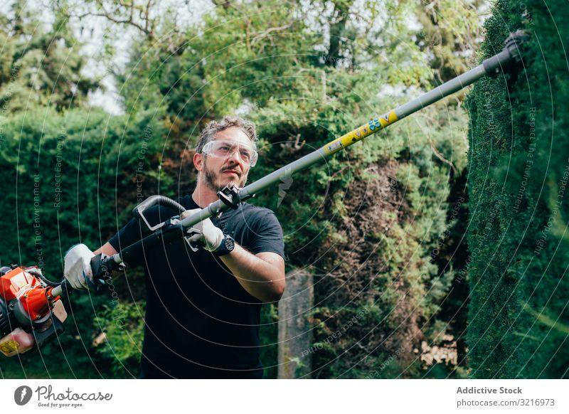Mann beschneidet Arizonica-Hecke arizonica Pflege Erhaltung Schneiden Garten Gärtner Handschuhe Lifestyle Natur Beruf außerhalb im Freien Menschen Person