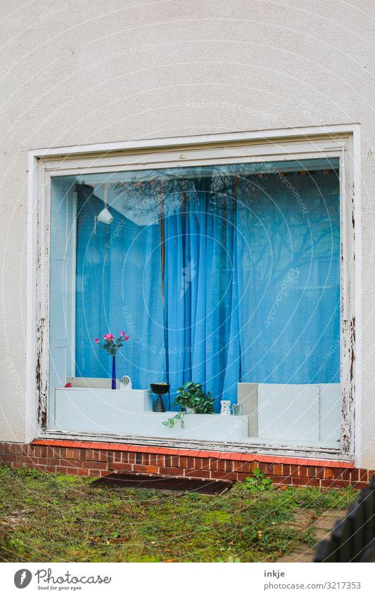 Das Fenster mit der blauen Gardine Lifestyle Häusliches Leben Wohnung Haus schlechtes Wetter Wiese Menschenleer Fassade Schaufenster Dekoration & Verzierung