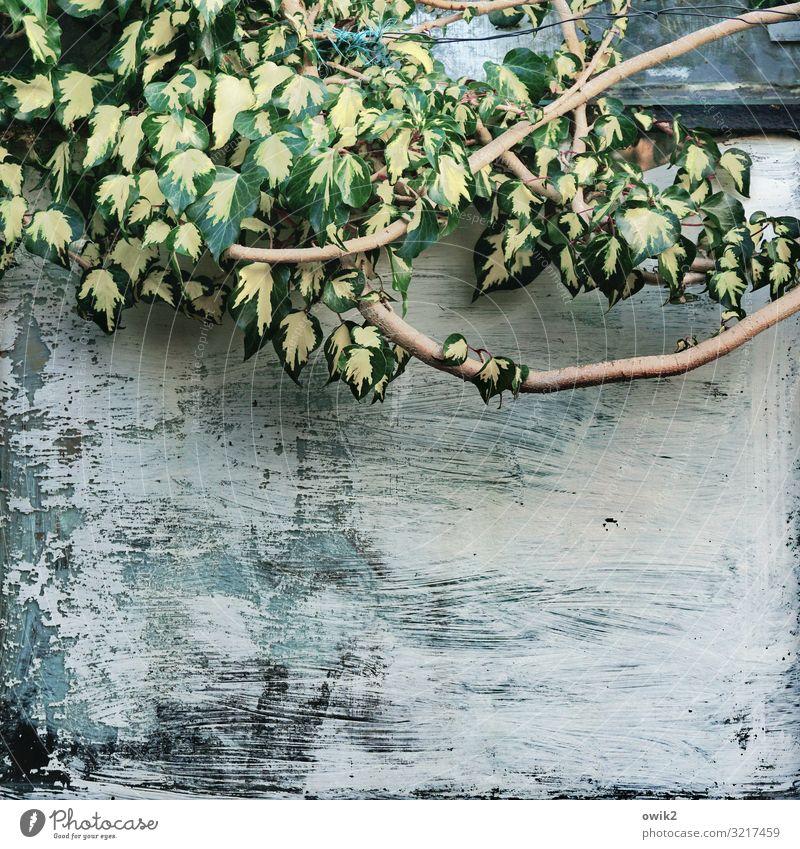 Hängende Masse Pflanze Herbst Schönes Wetter Sträucher Zweig Blatt Garten Gewächshaus Farbstoff gestrichen streichen Glas hängen Wachstum grün Verfall