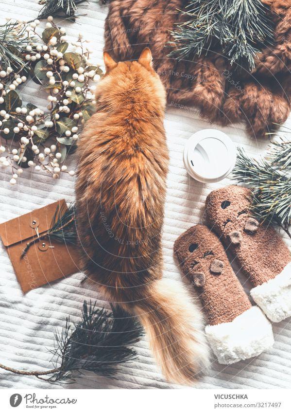 Gemütlicher Winter zu Hause mit Katze Lifestyle Design Freude Ferien & Urlaub & Reisen Häusliches Leben Weihnachten & Advent Haustier Dekoration & Verzierung