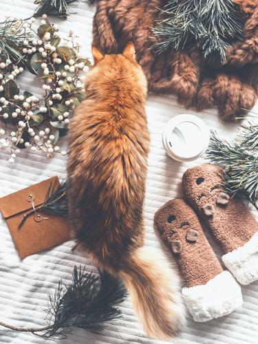 Gemütlicher Winter zu Hause mit Katze Ferien & Urlaub & Reisen Weihnachten & Advent Freude Lifestyle Häusliches Leben Design Dekoration & Verzierung Geschenk