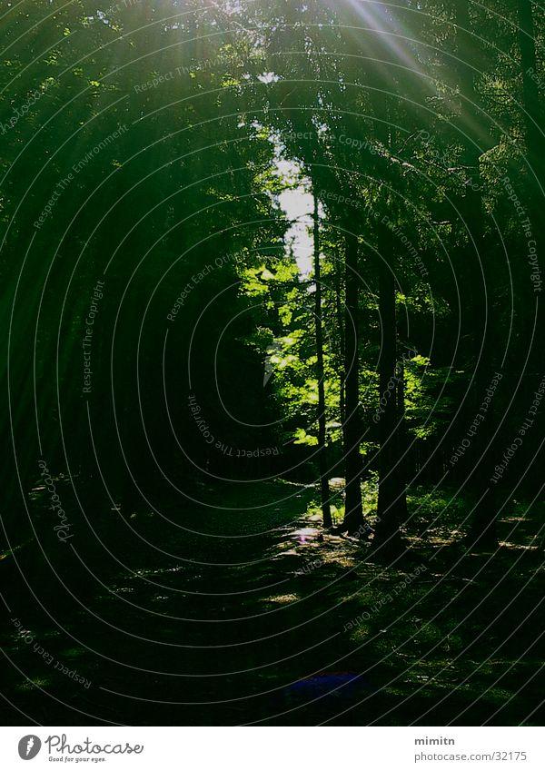 A walk in the woods Baum Sonne grün Wald dunkel