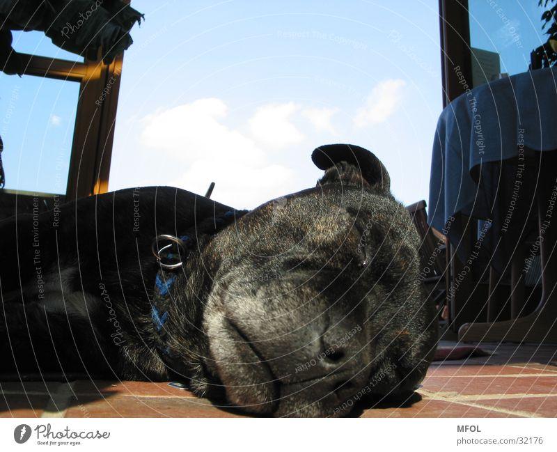 Penntüte alt Himmel grau Hund schlafen liegen Müdigkeit bequem Schnauze