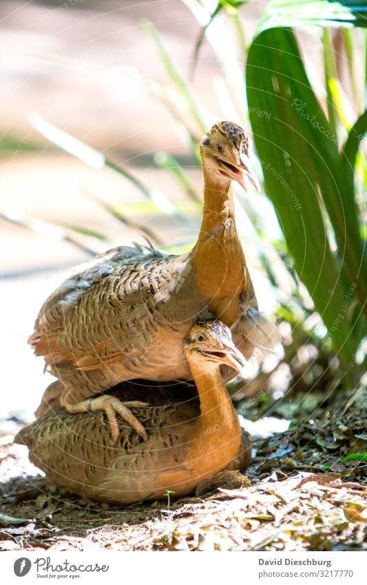 Knickknack im Dschungel Natur Frühling Sommer Schönes Wetter Urwald Tier 2 Tierpaar Frühlingsgefühle Zusammensein Liebe Tierliebe Verliebtheit Treue Romantik