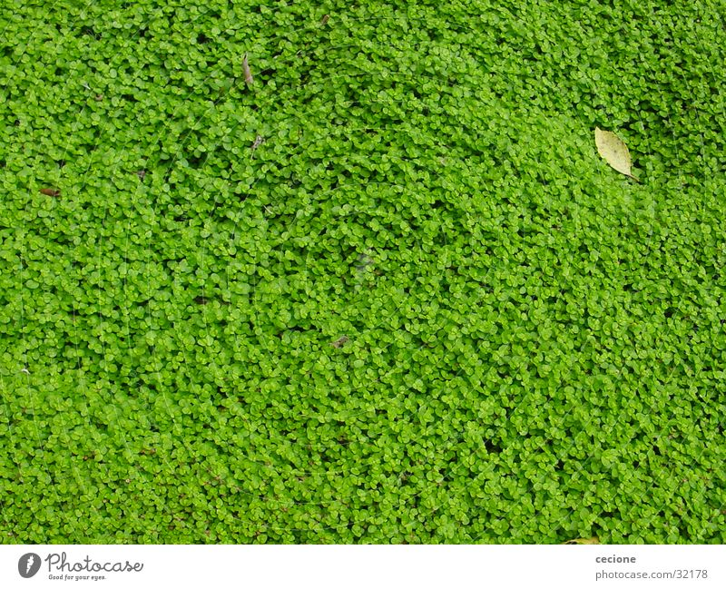 Blättermeer Natur grün Pflanze Blatt Frühling Hintergrundbild