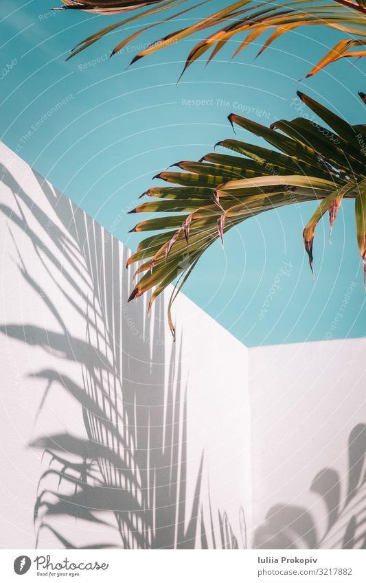 Himmel Natur Sommer Pflanze blau Farbe schön grün weiß Baum Blatt Textfreiraum Mode hell Kreativität Beautyfotografie