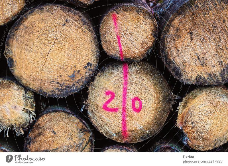Forstwirtschaft Möbel Arbeit & Erwerbstätigkeit Beruf Wirtschaft Landwirtschaft Umwelt Natur Herbst Pflanze Baum Wald Holz Zeichen Schriftzeichen